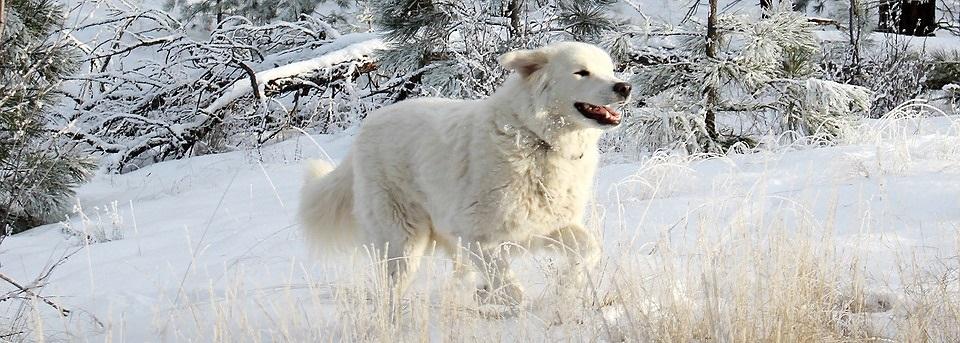 Der Hund im Winter  - Tipps - Hundehalter - Hunde im Winter - Tierarzt in Geretsried und Wolfratshausen