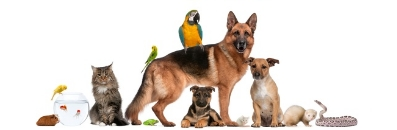 Tierarzt in Geretsried Dr. med. vet. Michael Kalk